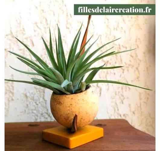 tillandsia's creation (1 plant)